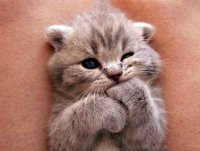 cute-kittens-30-57b30ad41bc90__605.jpg