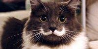 Pop_Culture_Cats_Hamilton_Hipster.jpg