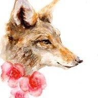*Coyote*