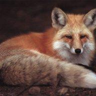 foxrox