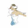 Avatar de Andrealphussette